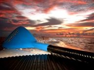 panga-surf SUP Paddle