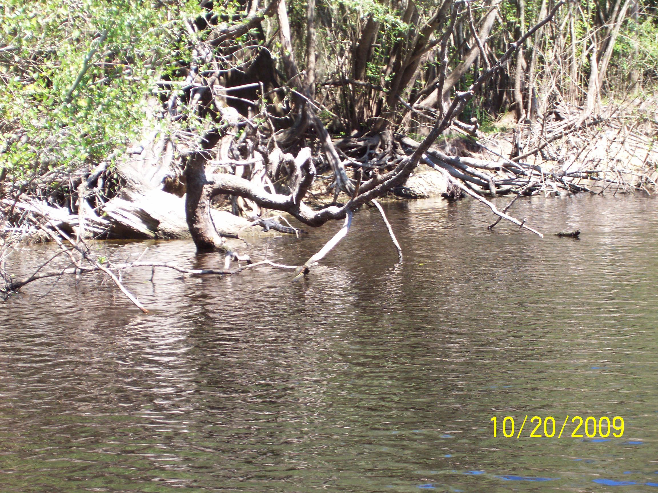 Wekiva/St. Johns River Ramble