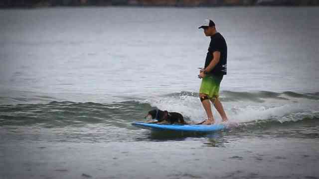 Video: supzero: Dog SUP Surf