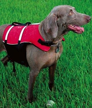 Deluxe Dog PFD - 9341_deluxe_1285337119